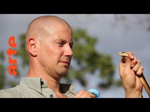 Auf der Jagd nach den giftigsten Schlangen Australiens ...