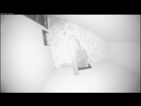 Kijk mee in het kraamverblijf van de panters (видео)