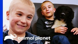 Meet The Boy On A Mission To Re-home Every Shelter Dog! | Dodo Heroes by Animal Planet