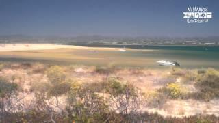 Relaxing Time - Ilha Deserta Em Faro (Algarve, Portugal)