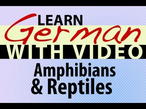 Learn German with Video – Amphibians and Reptiles