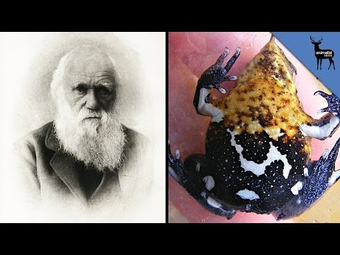 extinct - The Northern Darwin's Frog has officially been declared extinct! We're putting out new episodes Monday-Saturday, so please tune in daily and subscribe! You c...