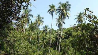 South Goa India  City pictures : South Goa Tour