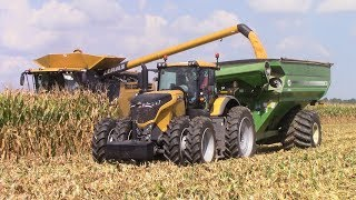 Video Challenger Tractor and CLAAS Combine Field Demonstration Day MP3, 3GP, MP4, WEBM, AVI, FLV November 2017