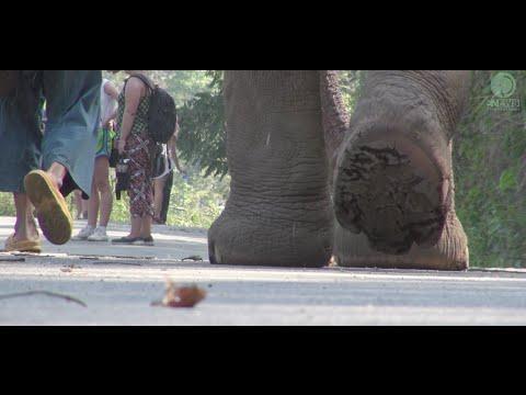A journey to  Elephant Kingdom