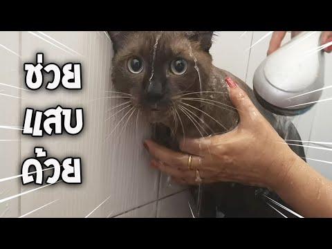 ละครแมว ตอน ช่วยแสบด้วย!!!! : พี่ทองดี