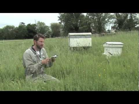 Beekeeping; From A to Bee, a diary of a first year beekeeper