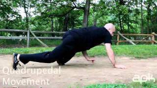 Quadrupedal Movement- Parkour Training and Conditioning