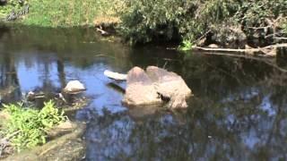 26 сен 2014 ... Вода мочит камень, а дерево точит. ekcat. SubscribeSubscribedUnsubscribe ... nМутим воду. - Duration: 10:21. ekcat 2,183 views. 10:21...