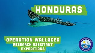 Operation Wallacea runs conservation research expeditions to 14 different countries worldwide. These expeditions are designed...