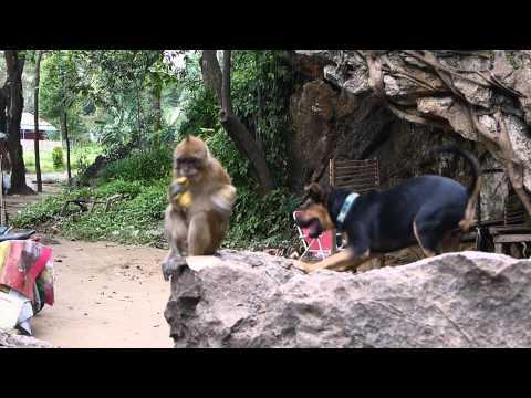 il-cucciolo-e-la-scimmia-91
