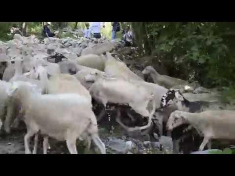 Un pomeriggio con le pecore