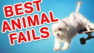 Video Best Animal Fails | Funny Fail Compilation MP3, 3GP, MP4, WEBM, AVI, FLV Januari 2019