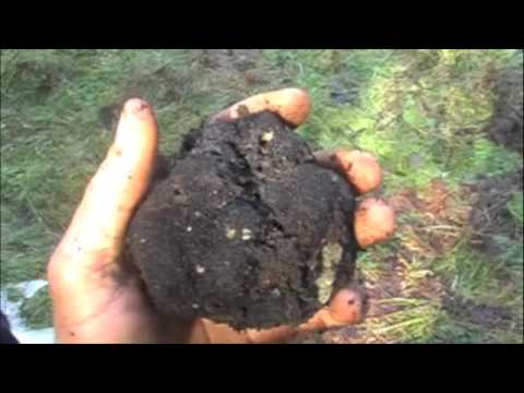 truffles - Here video of Zoe and I hunting for Oregon black truffles from the Winter 2009. UPDATE: I am sad to announce that Zoe is no longer gracing us on this beautif...