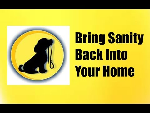 Help With Dog Behavior Problems   How to Actually Correct your Dog's Bad Behavior Video Tutorial