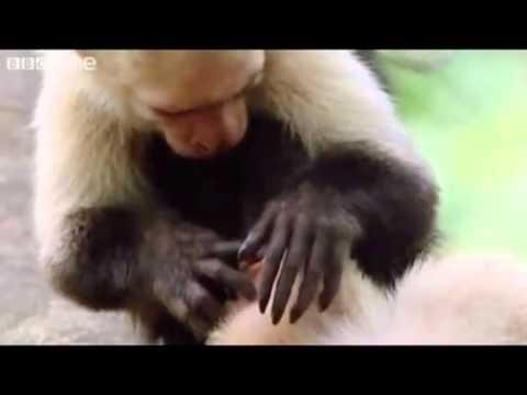 Smieklīgi dzīvnieku video