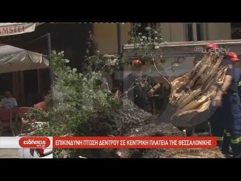 Επικίνδυνη πτώση δέντρου σε κεντρική πλατεία της Θεσσαλονίκης   01/06/2019   ΕΡΤ