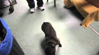 Puppy with brain tumor