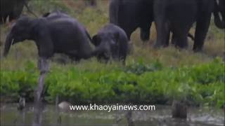 Elephant kick boxing in Kaeng Krachan National Park