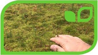 Torfabbau: Mooskulturen für die Renaturierung auf dem Feld Teil 15