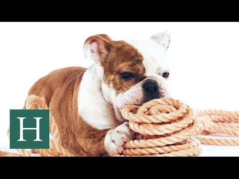 HuffPost x Purina — Cute Puppies Explore The Everyday Objects We Take For Granted