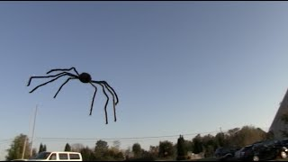 Video FLYING SPIDER PRANK! - Tom Mabe Halloween Pranks MP3, 3GP, MP4, WEBM, AVI, FLV Mei 2018