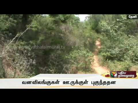 Wild-animals-enter-residential-areas-in-Theni