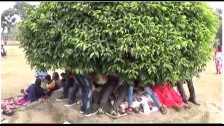 Video A Beautiful Tree Umbrella At The Eco Park (Prakiti Tirtha), Kolkata, West Bengal, Bangla, India MP3, 3GP, MP4, WEBM, AVI, FLV Desember 2017