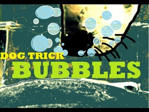 Teach Your Dog A Cool Trick -BLOWING BUBBLES UNDER WATER
