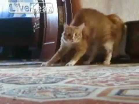 Thriller Cat...wait for it.