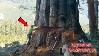 Video TOP 10 Most Dangerous Biggest Tree Felling Cutting Down with Chainsaw Machine EP. 2 MP3, 3GP, MP4, WEBM, AVI, FLV Juli 2019