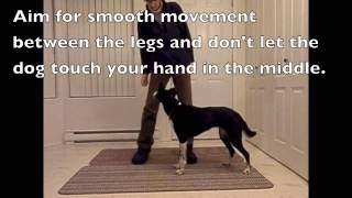 How To Teach A Leg Weave To A Dog