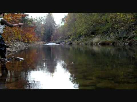 Fly Fishing the Elk in WV, trout, Rainbow Trout, Dry Flies