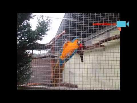 Papoušek ara zelenokřídlý a ara aruana v zoo Dvorec u Borovan