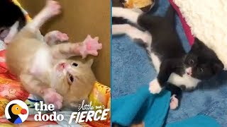 Watch These Teeny Wobbly Kittens Never Give Up | The Dodo Little But Fierce by The Dodo