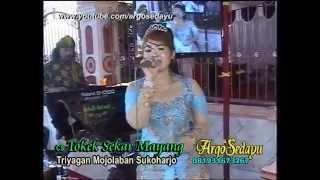 Video Pacobaning Urip Campursari Tokek Sekar Mayang MP3, 3GP, MP4, WEBM, AVI, FLV Agustus 2018