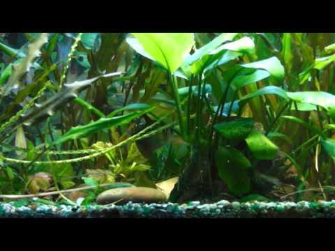 Красивый аквариум. Советы начинающим