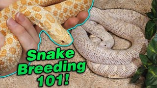 Snake Breeding Part 3: Waking up from Brumation! by Snake Discovery