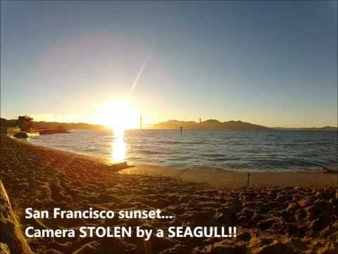 Camera stolen by a seagull