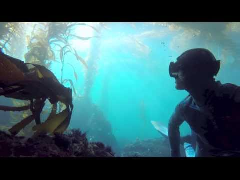 Underwater Freediving Tour California Kelp Forest