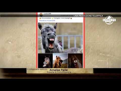 I cavalli al tempo dei social