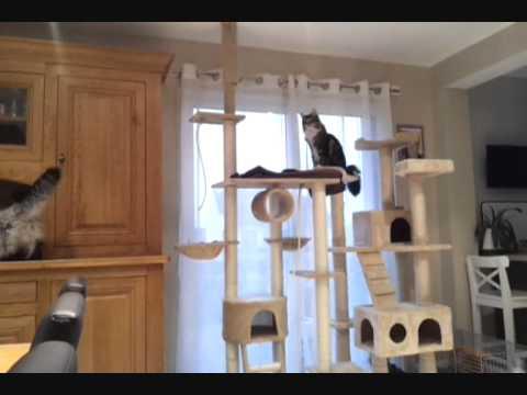 comment construire un arbre a chat la r ponse est sur. Black Bedroom Furniture Sets. Home Design Ideas