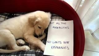 American Authors - Best Day Of My Life (dog version) - Pilgrim