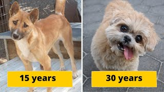 Top 20 Special Dog Breeds With The Longest Lifespans On Planet Earth by Did You Know Animals?