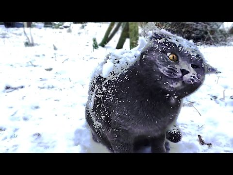 The Most Adorable Cat in Snow Moments