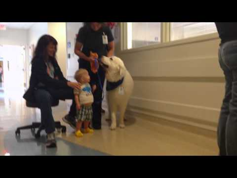 Watch video Child with Down Syndrome learning to walk with a therapy dog