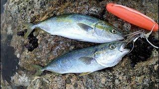 メタルアディクトでイナダ釣り