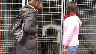 Touques France  City pictures : Refuge des chiens et chats de Touques Calvados, le vert Buisson