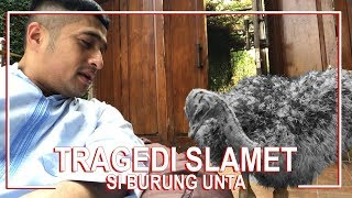 Video Tragedi Slamet, Si Burung Unta MP3, 3GP, MP4, WEBM, AVI, FLV Maret 2019