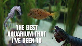 This Coolest Aquarium I've EVER Been Too! | Ripleys Aquarium Of Canada by Emma Lynne Sampson